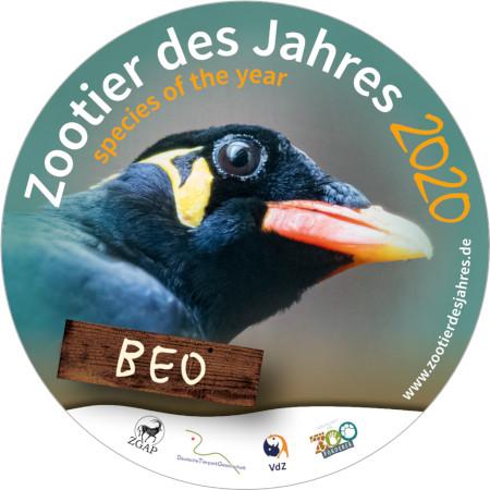 Der Beo ist das Zootier des Jahres 2020