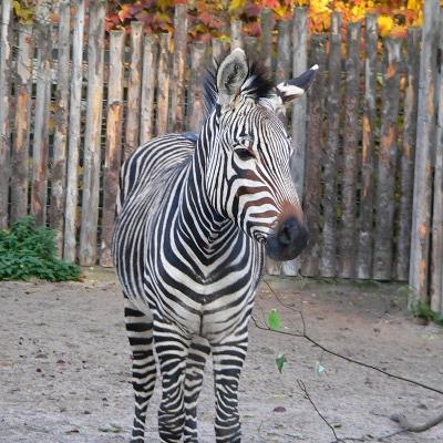 """""""Wie funktioniert eigentlich ein Zoo?"""" - Öffentliche Führung am 4. Oktober, 11 Uhr"""