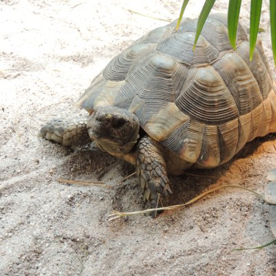 Frühlingserwachen bei den Landschildkröten