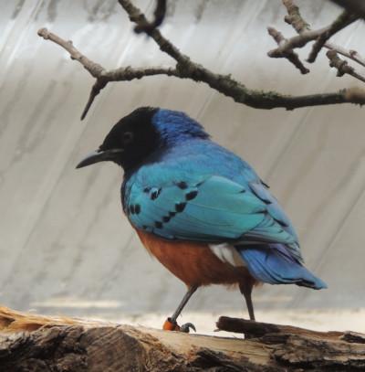 """""""Willkommen bei den Vögeln Ostafrikas"""" heißt es in nach Renovierung wiedereröffneter Volierenanlage im Zoo Landau in der Pfalz"""