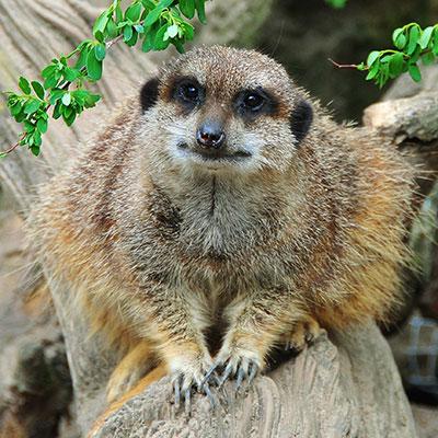 Zoobesuch in Zeiten von Corona - Datenerfassungsbogen zum Herunterladen HIER