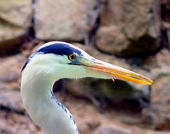 Landauer Studierende belegen hohe Vielfalt an Wildvogelarten im Zoo Landau in der Pfalz