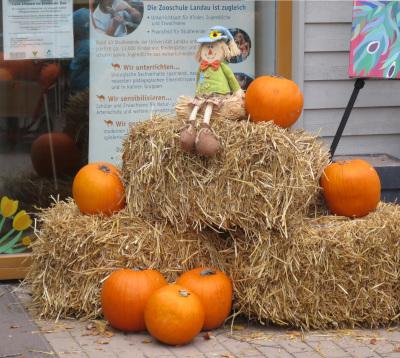 """""""Zootiere erleben, Kürbisse und mehr"""" - Herbstfest am Samstag 27. Oktober, 15-19 Uhr"""