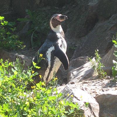 Ein Jahr zum Schutz von Pinguin, Otter & Co. - Öffentliche Führung am 1. März, 11 Uhr