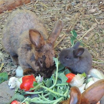 Kaninchennachwuchs im Streichelzoo