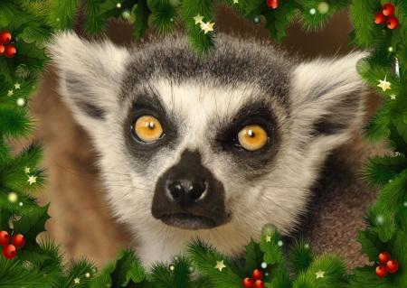 Wünsche wahr werden lassen für die Tiere des Zoo Landau in der Pfalz