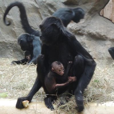 Erfreulicher Nachwuchs im Affenrevier