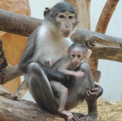Zusatztermin: Opa-Oma-Enkeltag im Zoo Landau in der Pfalz