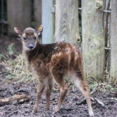 """""""Artenvielfalt im Zoo entdecken"""" – kostenfreie Erlebnisführung für Familien am 27. Mai, 14 Uhr"""
