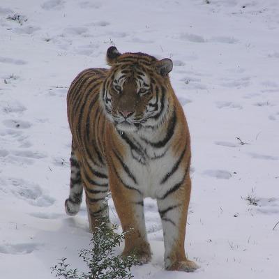 Kostenfreies WLAN für die Landauer Zooschule
