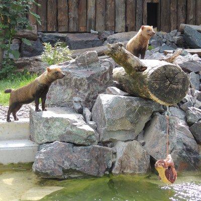 Am 8. August geht's wieder auf Zoo-Safari
