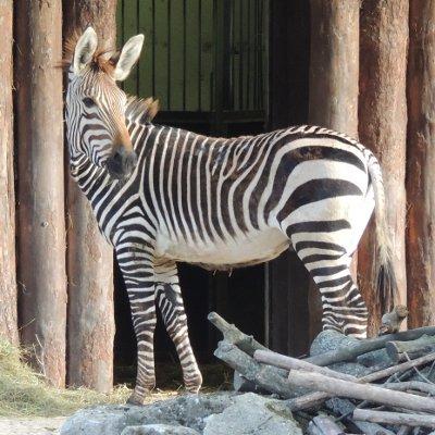 Der neue Zooführer ist da!
