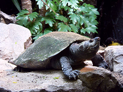 Ältestes Tier des Zoo Landau verstorben